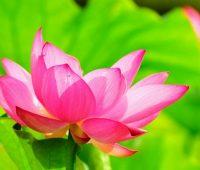 悟覺妙天禪師講述|八正道讓靈性進入聖位,不再輪迴
